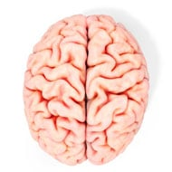 brain-on-white-background